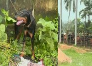 The Heartbreaking Way, Dog And Cows Grieving Over Udupi Krishna Matt Shiroor  Seer's Death