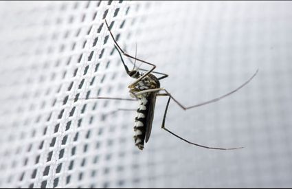 Simple home tips to control mosquitoes