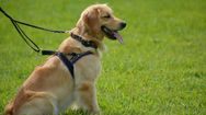 study shows bacterias in dog's bowl may harm human and pets