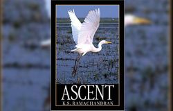 Ascent book review
