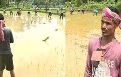 migrant workers paddy