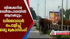elephants crossing road in busy Coimabtore to Mettupalayam national Highway