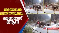 video of elephant lifting railway gate goes viral