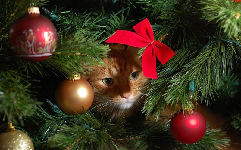 When it's a cat and mouse game, these pets can get under a Christmas tree as well
