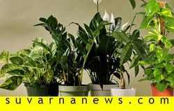 grow these plants in your home and grow rich