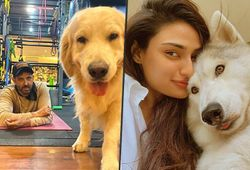 Samantha Akkineni to Hrithik Roshan: Celebs spend time with their pets amid COVID-19 lockdown