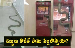 <p>Poisonous snake enters in a ATM in Ghaziabad, sends everyone in a tizzy</p>