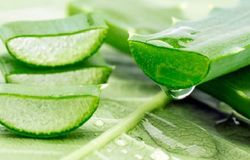 <h1><strong>Aloe Vera:</strong> Also called the Eternal One, the aloe vera is a versatile ingredient. This plant has some incredible healing properties.<br /> &nbsp;</h1>