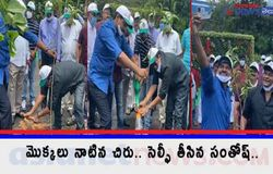 <p>Megastar Chiranjeevi Accept Green India Challenge and Plant Saplings <br />  </p>