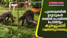 Wrestling Monitor Lizards pet dog reaction seeing this