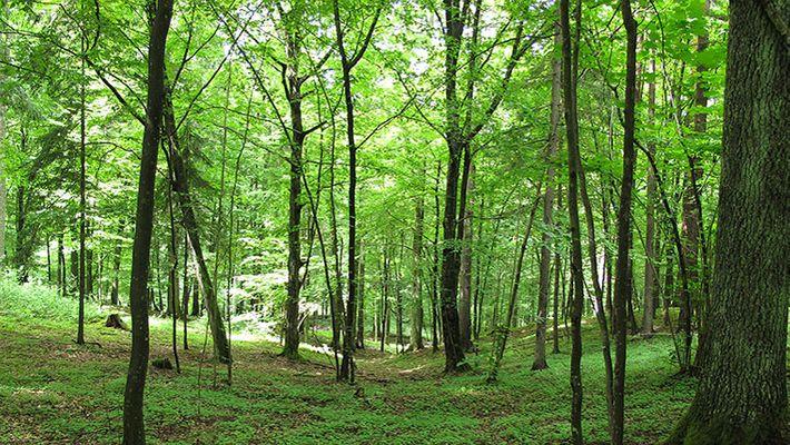 No leave forest watchers quit job