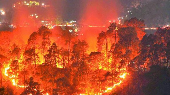 Bandipur disaster authorities declare forest fires national disaster